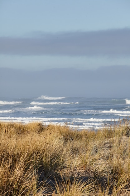 Vertikale aufnahme von strandgras am morgen am cannon beach, oregon Kostenlose Fotos