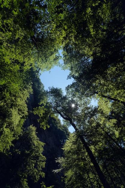 Vertikale flachwinkelaufnahme der hohen bäume im wald der gemeinde skrad in kroatien Kostenlose Fotos