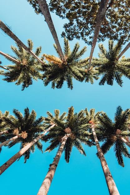 Vertikale flachwinkelaufnahme der palmen im botanischen garten von rio Kostenlose Fotos