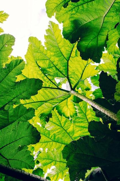 Vertikale flachwinkelaufnahme von grünen blättern unter dem schatten der sonne - ideal für tapeten Kostenlose Fotos