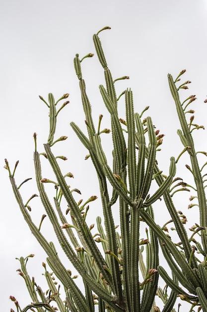 Vertikale flachwinkelaufnahme von grünen kaktuspflanzen unter einem klaren himmel Kostenlose Fotos