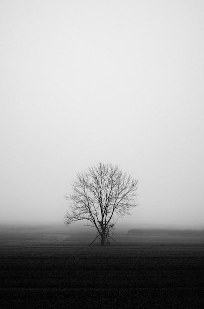Vertikale graustufenaufnahme eines geheimnisvollen feldes, das mit nebel bedeckt ist Kostenlose Fotos
