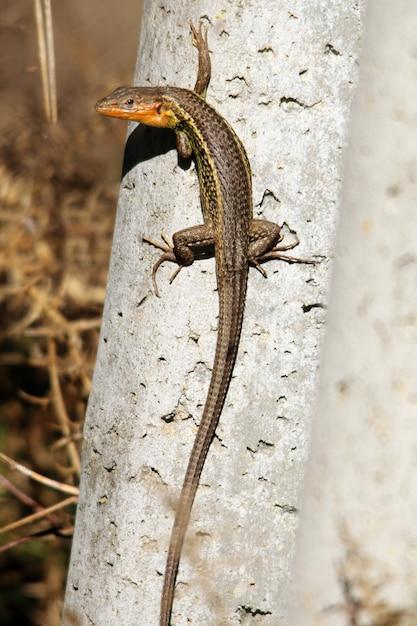 Vertikale nahaufnahmeaufnahme einer alligatoreidechse, die auf einem stück holz geht Kostenlose Fotos