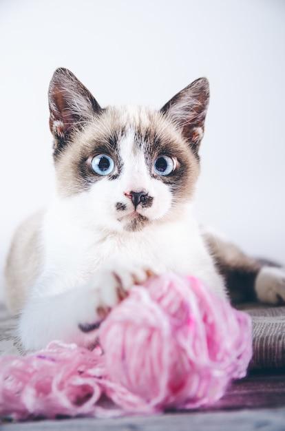 Vertikale nahaufnahmeaufnahme einer niedlichen braunen und weißen blauäugigen katze, die mit einem wollknäuel spielt Kostenlose Fotos