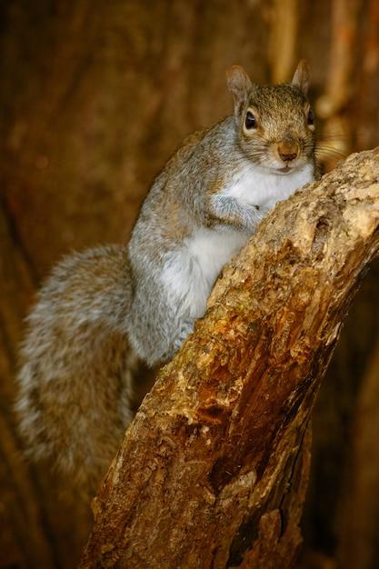 Vertikale nahaufnahmeaufnahme eines niedlichen eichhörnchens auf einem baum Kostenlose Fotos