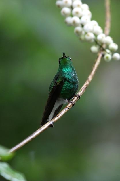 Vertikale selektive fokusaufnahme eines schönen grünen kolibris, der auf einem zweig thront Kostenlose Fotos