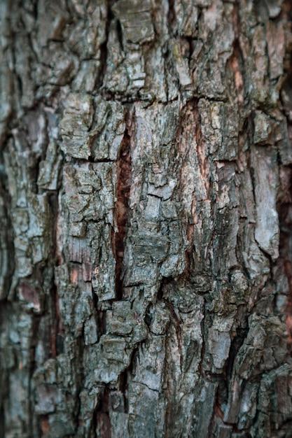 Vertikaler entlastungsbeschaffenheitshintergrund der braunen barke eines baums. hintergrundbild für das gerät Premium Fotos