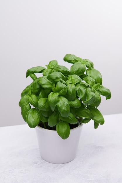 Vertikaler hochwinkelschuss einer schönen pflanze in einer weißen vase auf einer weißen oberfläche Kostenlose Fotos