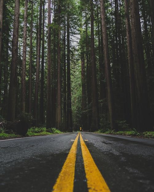 Vertikaler schuss einer leeren straße in der mitte eines waldes mit hohen grünen bäumen Kostenlose Fotos