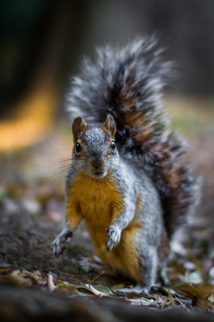 Vertikaler schuss eines eichhörnchens auf dem waldboden Kostenlose Fotos