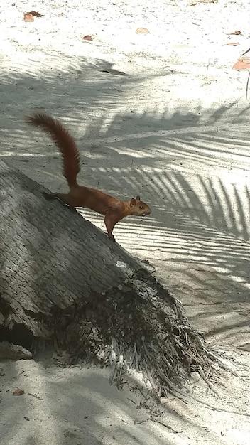 Vertikaler schuss eines eichhörnchens auf einem baum am strand Kostenlose Fotos