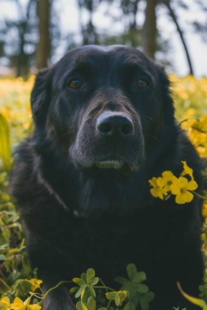 Vertikaler schuss eines niedlichen hundes, der nahe gelben blumen steht Kostenlose Fotos