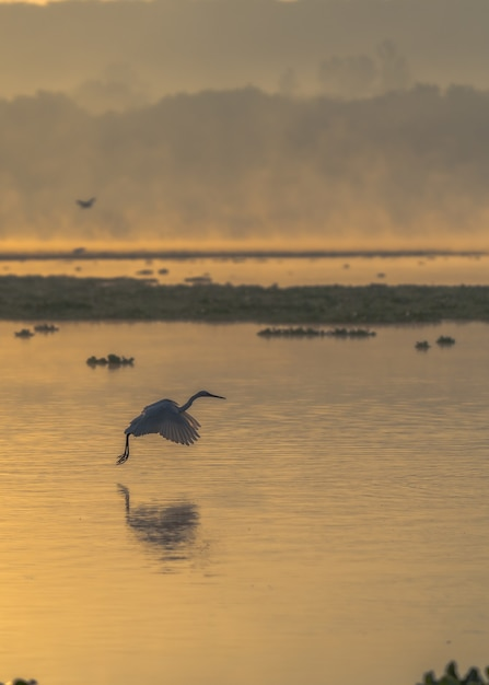 Vertikaler schuss eines vogels, der über dem meer während des sonnenuntergangs fliegt Kostenlose Fotos