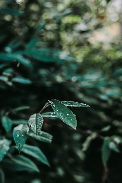 Vertikaler schuss von grünen blättern mit tau Kostenlose Fotos