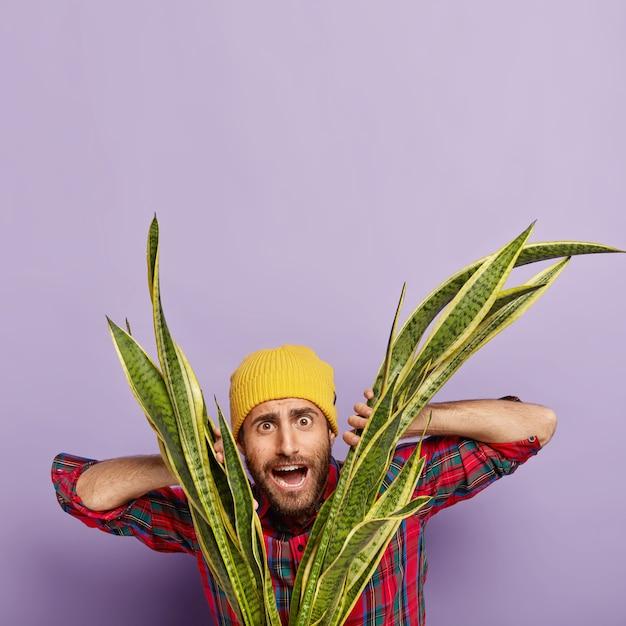Vertikales bild des überraschten verwirrten männlichen floristen schaut durch blätter der grünen schlangenpflanze, kümmert sich um zimmerpflanze, mag seinen job, trägt gelbe kopfbedeckung und kariertes rotes hemd, posiert innen Kostenlose Fotos