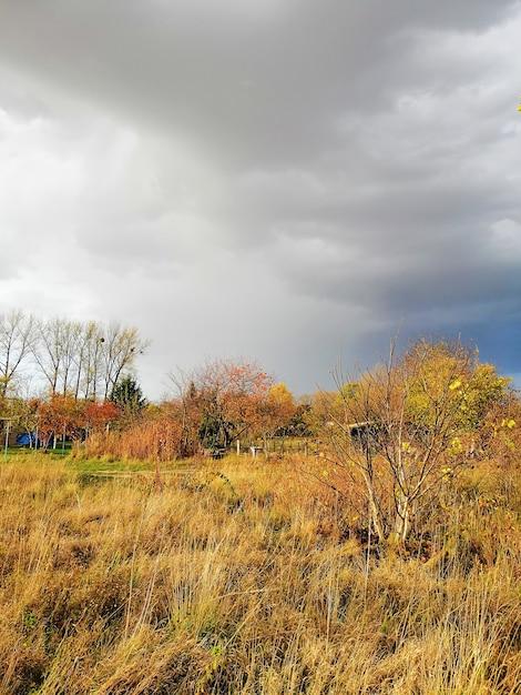 Vertikales bild einer wiese unter einem bewölkten himmel während des herbstes in polen Kostenlose Fotos