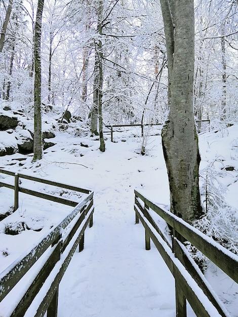 Vertikales bild von bäumen, umgeben von holzzäunen, die im schnee in larvik in norwegen bedeckt sind Kostenlose Fotos