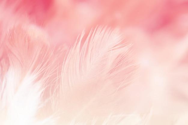 Verwischen sie styls und weiche farbe der hühnerfederbeschaffenheit für den hintergrund, abstrakt bunt Premium Fotos