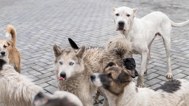 Viele rettungshunde im tierheim warten darauf, adoptiert zu werden Kostenlose Fotos