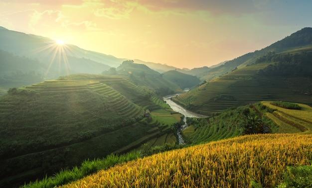 Vietnam reisfelder bereiten die ernte im nordwesten vietnams vor. vietnam landschaften. Premium Fotos