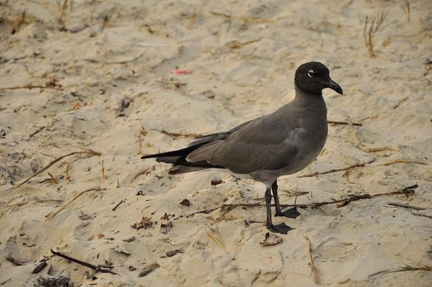 Vögel am strand auf den galapagos-inseln Premium Fotos