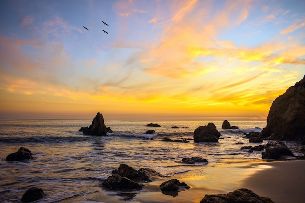 Vögel fliegen über das ozeanufer während eines schönen sonnenuntergangs Kostenlose Fotos