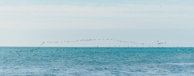 Vögel fliegen über der meeresoberfläche Premium Fotos