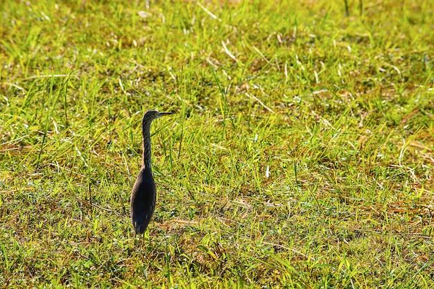 Vögel stehen in einem hellgrünen rasen. Premium Fotos