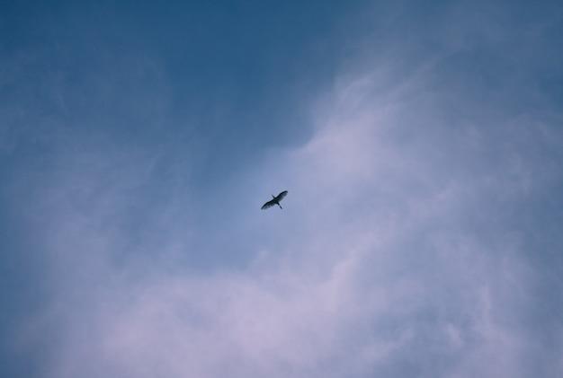 Vögel und blauer himmel am abend Premium Fotos