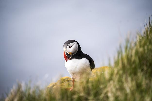 Vogel, der auf gras steht Kostenlose Fotos