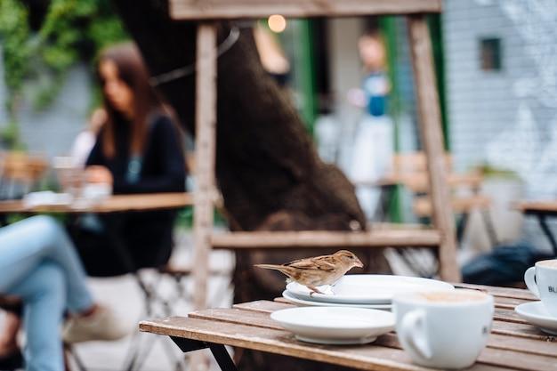 Vogel in der stadt. spatz sitzt auf tisch im straßencafé Kostenlose Fotos