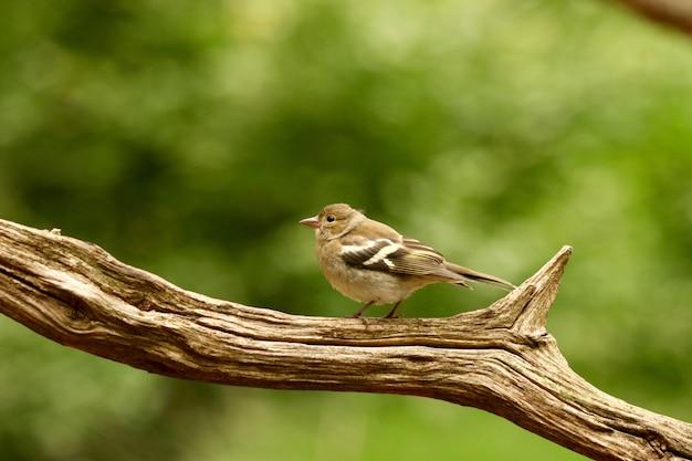 Vogel in einem zweig Kostenlose Fotos