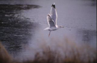 Vogel-, luft- Kostenlose Fotos