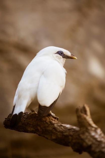 Vogel Kostenlose Fotos