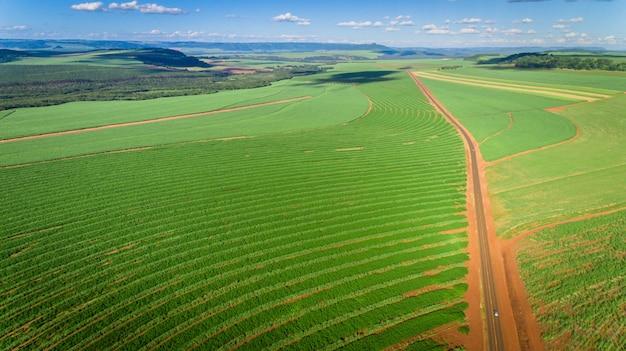 Vogelperspektive des zuckerrohrplantagenfeldes mit sonnenlicht. landwirtschaftliche industrie. Premium Fotos