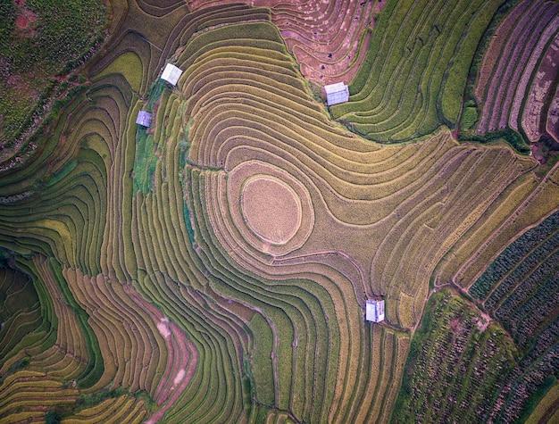 Vogelperspektive von reisfeldern auf terassenförmig angelegtem von mu cang chai, yenbai, vietnam. Premium Fotos