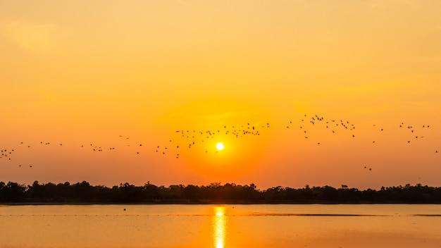 Vogelschwarm im reservoir, schatten des sonnenuntergangs, seemöwe Premium Fotos