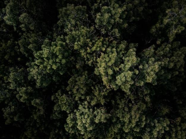 Voller rahmen schoss von den grünen bäumen, die im wald wachsen Kostenlose Fotos
