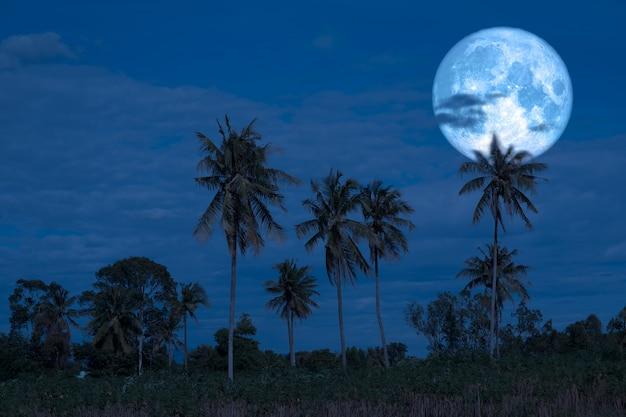 Voller störmond auf den hinteren schattenbildkokosnussbäumen des nächtlichen himmels Premium Fotos