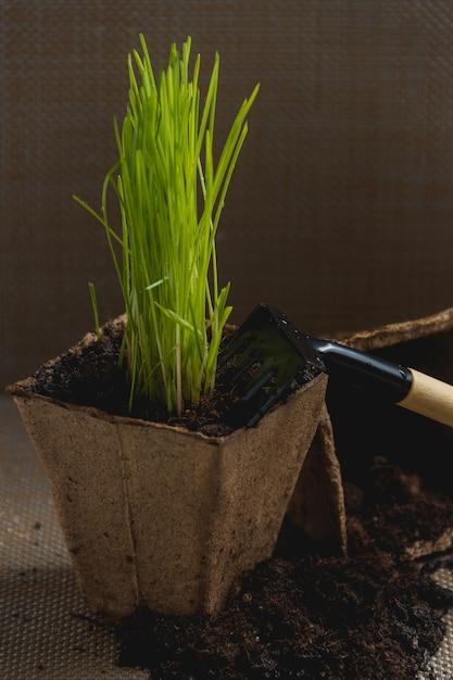 Vorbereitung für die saisonale transplantation der pflanze Premium Fotos