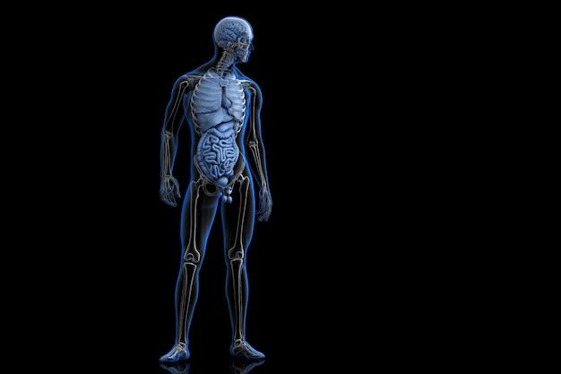 Vorderansicht des menschlichen körpers 3d abbildung Premium Fotos