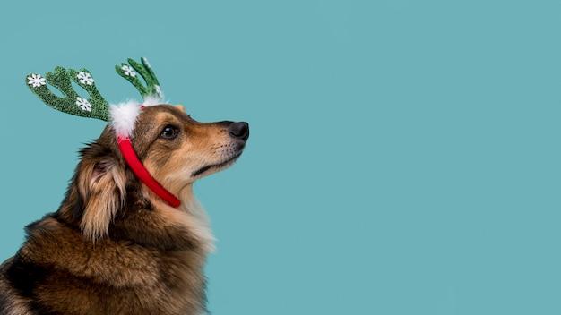 Vorderansicht des schönen hundes mit kopienraum Kostenlose Fotos
