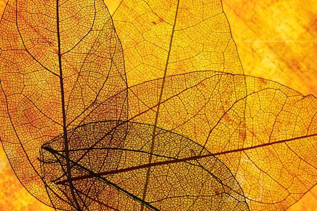 Vorderansicht von orange transparenten blättern Kostenlose Fotos