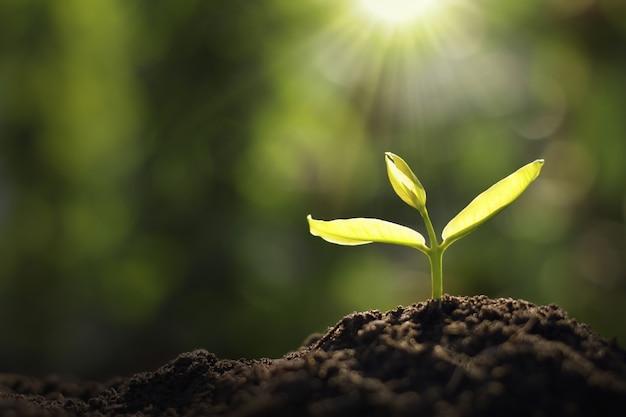 Wachsende jungpflanze im garten- und morgenlicht Premium Fotos