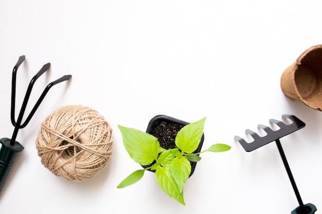 Wachsendes gemüse. frühling. gartengeräte und töpfe für pflanzen. Premium Fotos