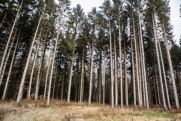 Wald bedeckt im gras, umgeben von hohen bäumen unter einem bewölkten himmel Kostenlose Fotos