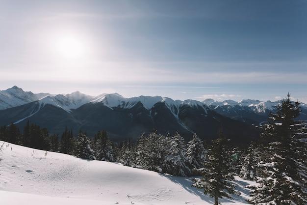 Wald in verschneiten bergen Kostenlose Fotos