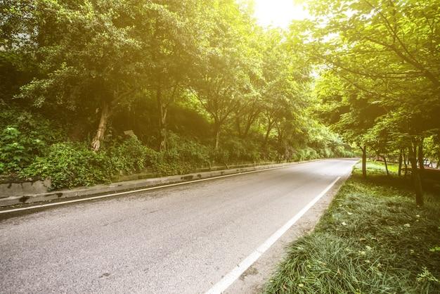 Wald mit fahrbahn Kostenlose Fotos