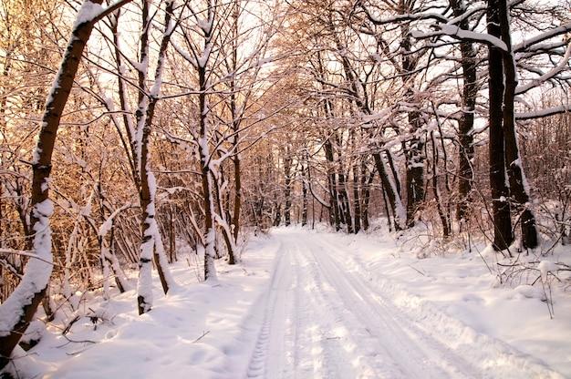 Wald mit schneebedeckten bäumen Kostenlose Fotos