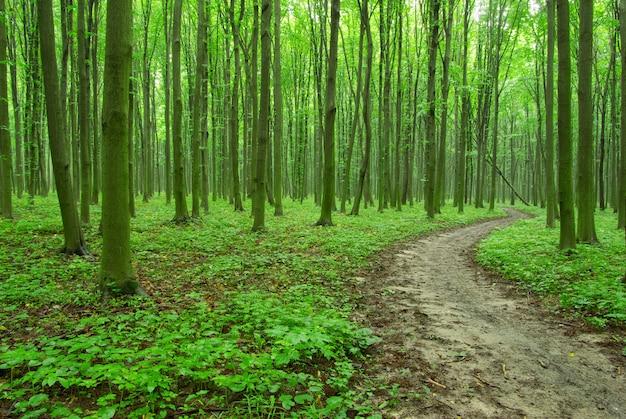 Wald-tapete Premium Fotos